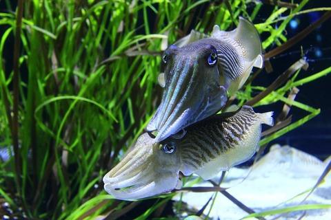 calamaro-1742361_640