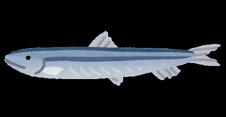 fish_kibinago