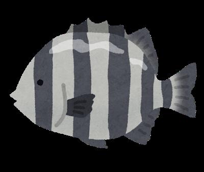 fish_ishidai2