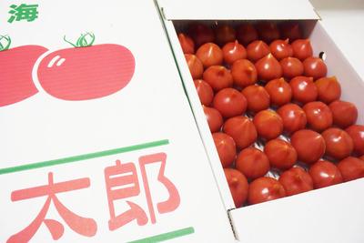 20160510トマト