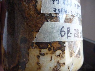 ファブリースとタラ838×547幼虫 (6)