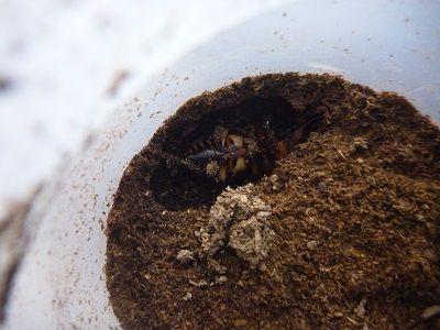 ファブリースとタラ838×547幼虫 (7)