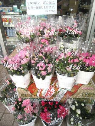 ブログ用 お花