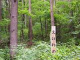 えいわの森 4