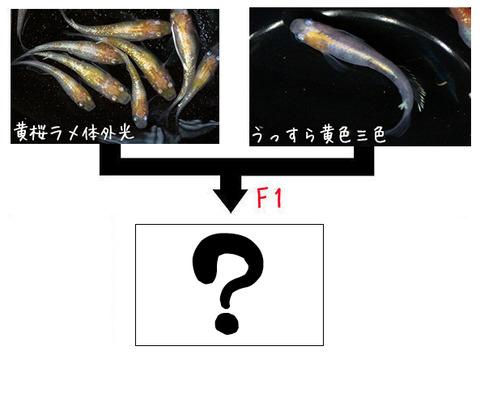 黄桜×黄幹之
