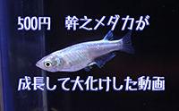 IMG_4177s