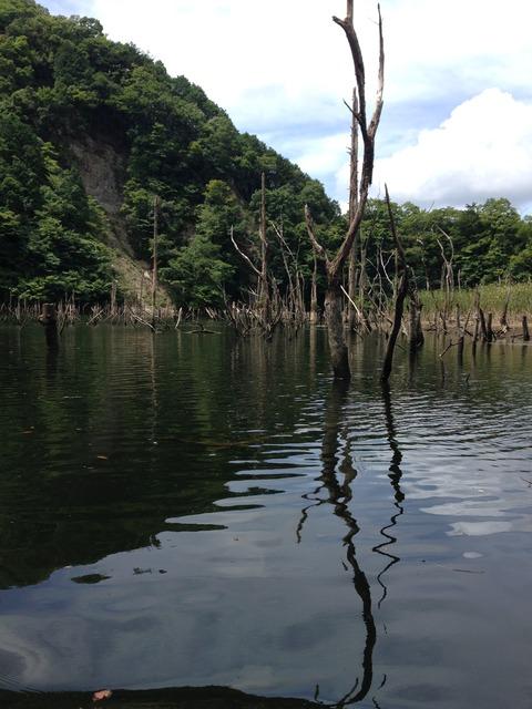 沈み木が多い片倉ダム