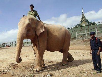 象はアジア、ミャンマーの北西 ...