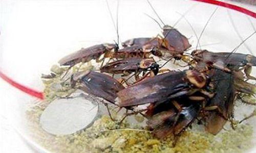 crema-facial-cucarachas-02