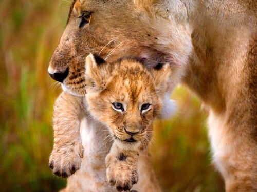 animal-mothers-babies-12 (1)