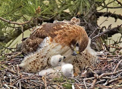 Animal-Mothers-Babies-18