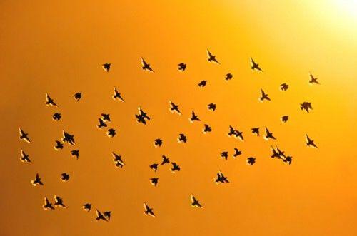 bird-8-500x331