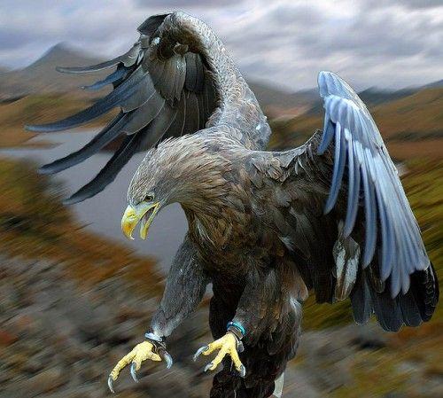 bird-14-500x449
