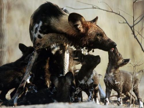 Animal-Mothers-Babies-22