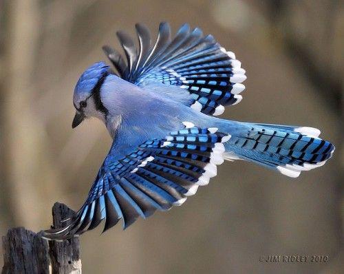 bird-19-500x398