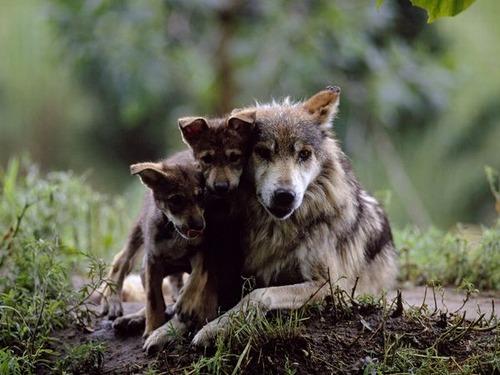 Animal-Mothers-Babies-19