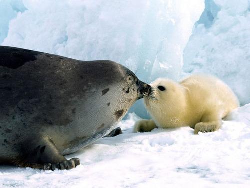 Animal-Mothers-Babies-11