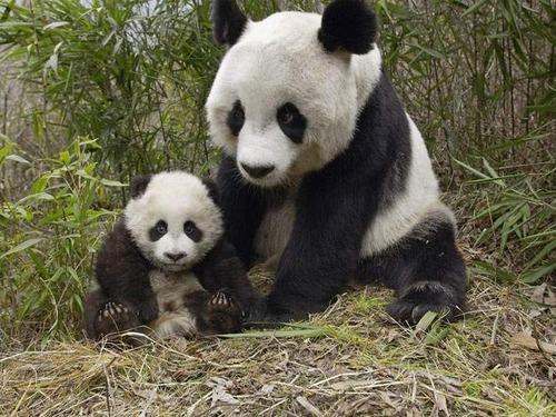 Animal-Mothers-Babies-7