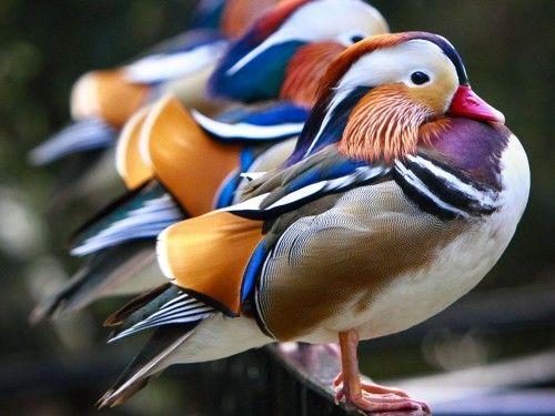 bird-10-500x375