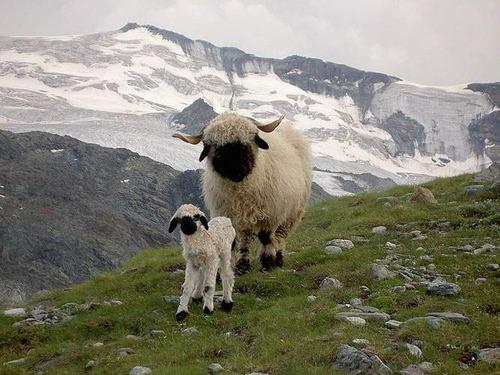 Animal-Mothers-Babies-8