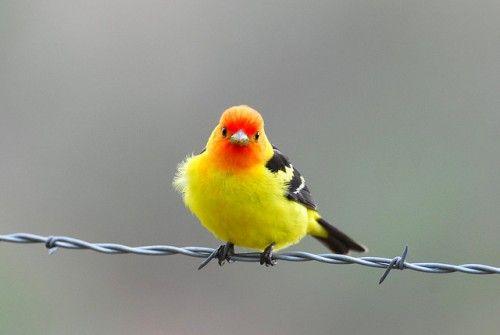 bird-20-500x335