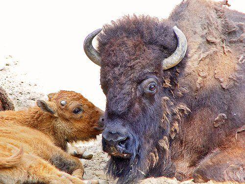 Animal-Mothers-Babies-1