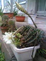ほったらかしの植木鉢