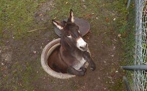 donkey5n-3-web