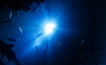 6k-deep-sea-image