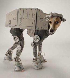 20111010_at-at-dog