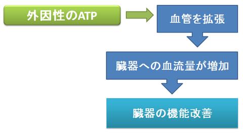 アデホスと外因性ATP