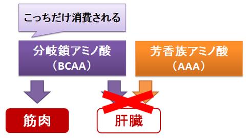 アミノ酸のバランス~BCAAとAAA