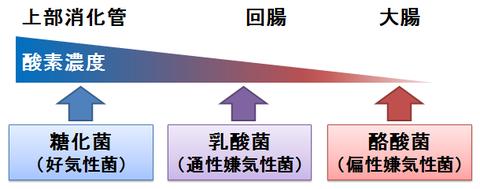 ビオスリー~酸素感受性の異なる菌