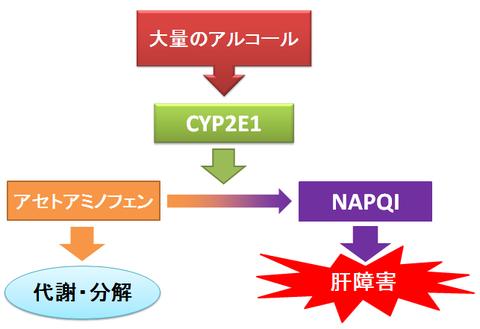 お薬Q&A 〜Fizz Drug Information〜アセトアミノフェンとお酒(アルコール)は相性悪い?~NAPQIの肝毒性
