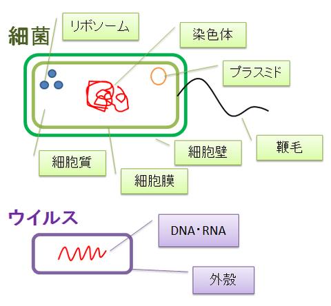 細菌とウイルス5~構造