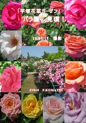 180515花菜G01・jpg._01