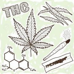 元国民的アイドルAに大麻使用疑惑 捜査当局が行動確認中か