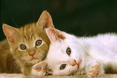 中国人が抱く疑問「日本人はなぜこんなにも猫が好きなのか」=中国報道