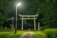 真夜中の神社を撮っていたら偶然出会った動物が「神のお使い」のような雰囲気だった