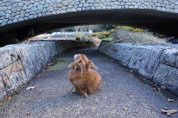 木曽三川橋の下と蓮