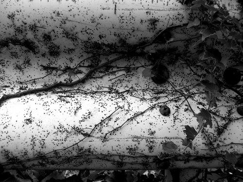 ガードレールの蔦の跡さえも輝いて見えたよ