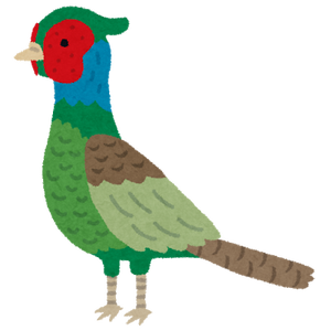 bird_kiji