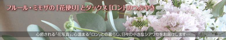フルール・ミモザの「花便り」とダックス「ロン」のつぶやき