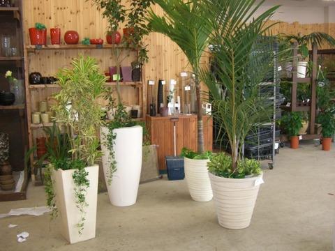 中国陶器と観葉植物