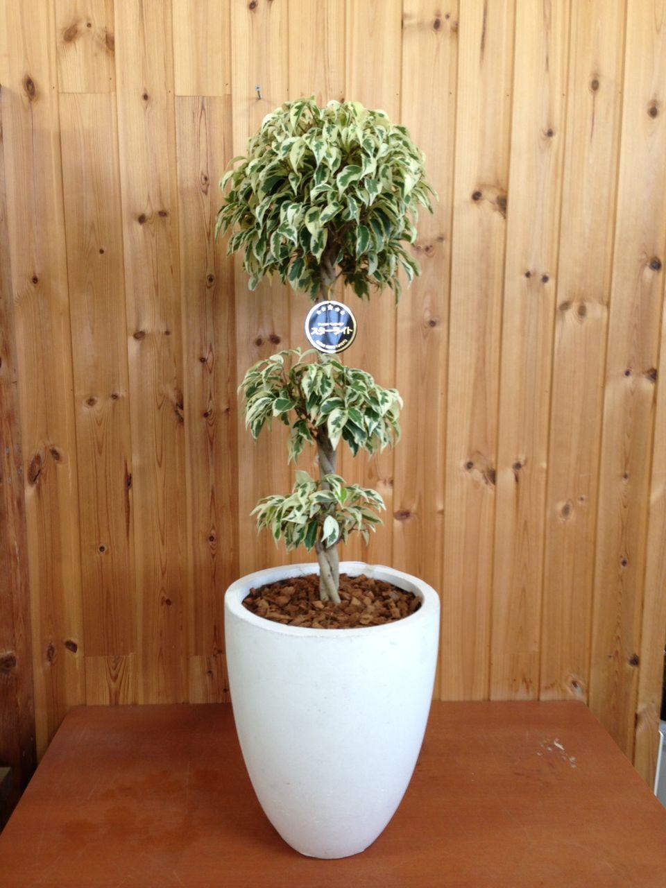 観葉植物のオリジナル商品、はじめました。  函館の花屋