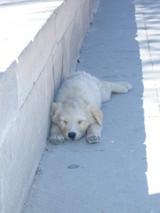 石切り場の子犬