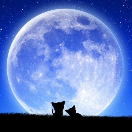 moon-cats