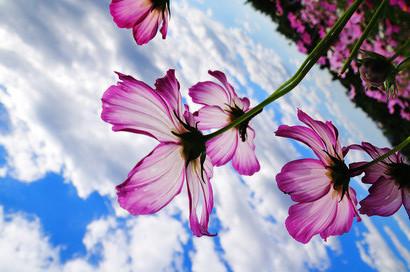 flower-c