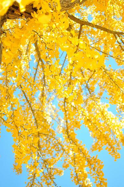 autumn-leaves-13
