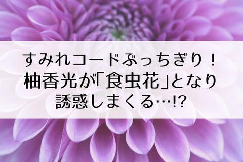 柚香光食虫花